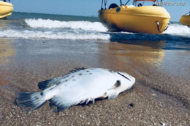Sau trận động đất, cá chết hàng loạt xuất hiện ở bờ biển của Nhật Bản, chuyện gì sắp xảy ra? ảnh 4