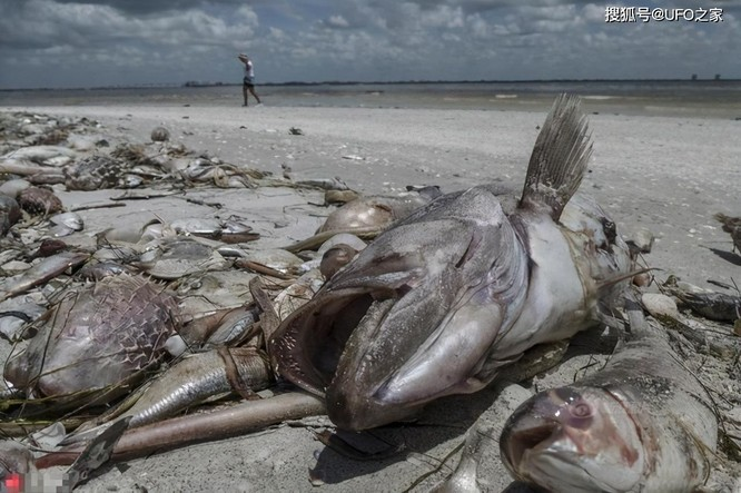 Sau trận động đất, cá chết hàng loạt xuất hiện ở bờ biển của Nhật Bản, chuyện gì sắp xảy ra? ảnh 1
