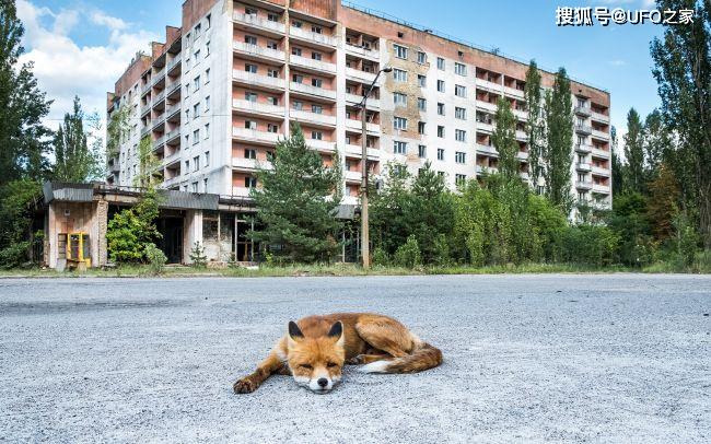 Tại sao bức xạ Chernobyl khiến động vật chết hàng loạt nhưng thực vật phát triển ngày càng tươi tốt? ảnh 3