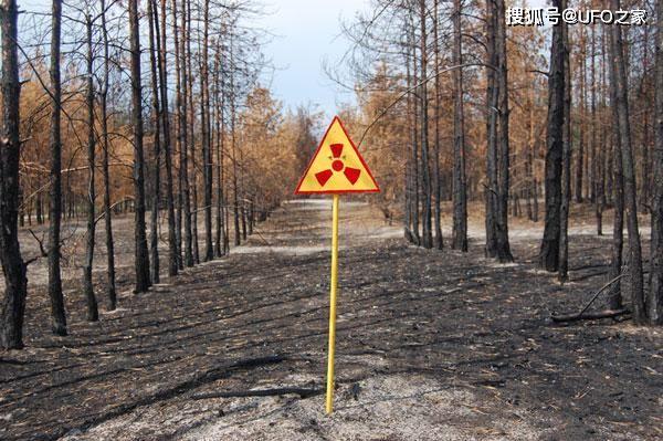 Tại sao bức xạ Chernobyl khiến động vật chết hàng loạt nhưng thực vật phát triển ngày càng tươi tốt? ảnh 1