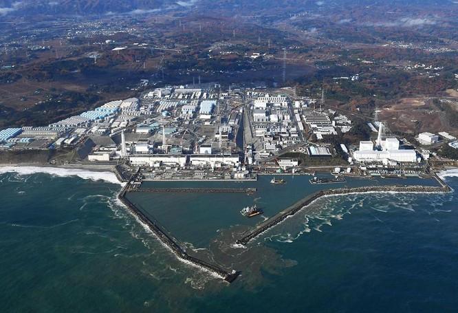 """Mười năm sau vụ rò rỉ hạt nhân, """"cá nhiễm phóng xạ"""" lại xuất hiện ở Fukushima ảnh 1"""