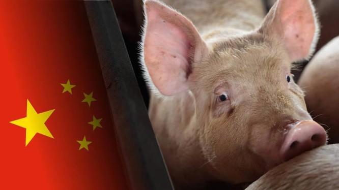 Tại sao các công ty công nghệ Trung Quốc tham gia vào lĩnh vực chăn nuôi heo? ảnh 4
