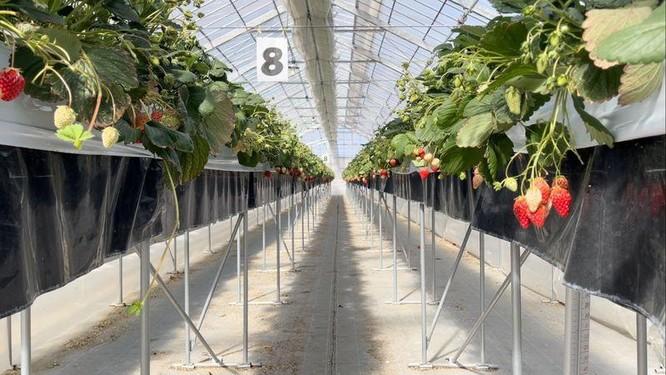 Vì sao hoa quả ở Nhật Bản rất đắt, một quả dưa có thể bán tới nửa tỉ đồng? ảnh 3