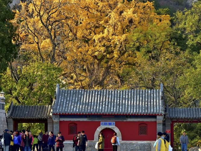 Xâm hại tình dục nữ đệ tử - Hội trưởng Phật giáo Trung Quốc bị bãi chức ảnh 2