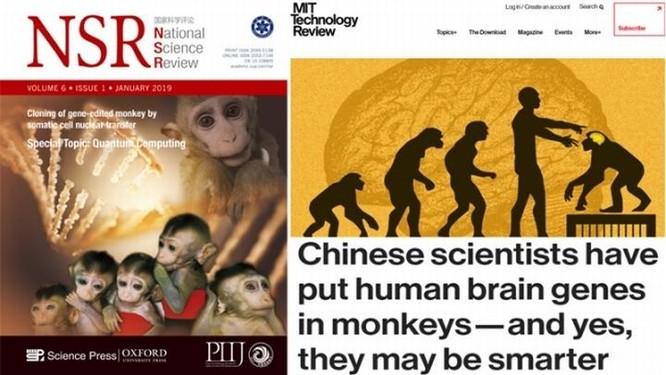 Đưa gene người vào não khỉ - các nhà khoa học Trung Quốc lại gây sóng gió ảnh 3