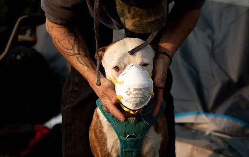Hong Kong thông báo tìm thấy nCoV ở miệng và mũi chó nhà ảnh 1