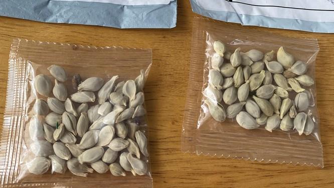Bí ẩn phía sau các túi hạt giống lạ được gửi từ Trung Quốc tới Mỹ, Canada và Nhật ảnh 4