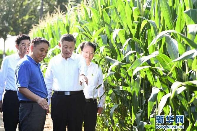 Truyền thông Đức: Trung Quốc và nỗi lo lắng về an ninh lương thực ảnh 3