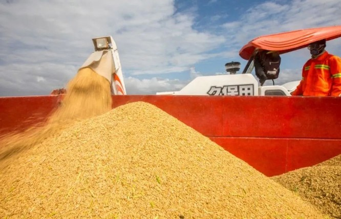 Truyền thông Đức: Trung Quốc và nỗi lo lắng về an ninh lương thực ảnh 2