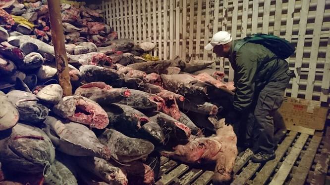 Hàng trăm tàu đánh cá đại dương Trung Quốc ồ ạt tới đánh bắt gần vùng đặc quyền kinh tế Ecuador ảnh 3