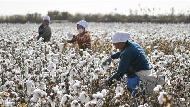 Hãng thời trang H&M tuyên bố không mua bông hay làm ăn với Tân Cương, Trung Quốc nổi giận ảnh 4