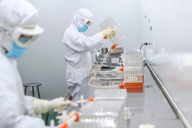 The Lancet: kháng thể sinh ra sau khi tiêm 2 liều Sinovac ít hơn 10 lần Pfizer ảnh 3
