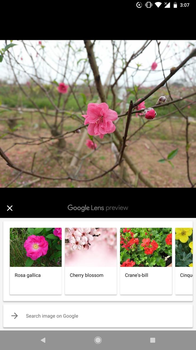 """Hướng dẫn toàn tập sử dụng Google Lens: """"Đọc vị"""" thông tin trong ảnh ảnh 4"""