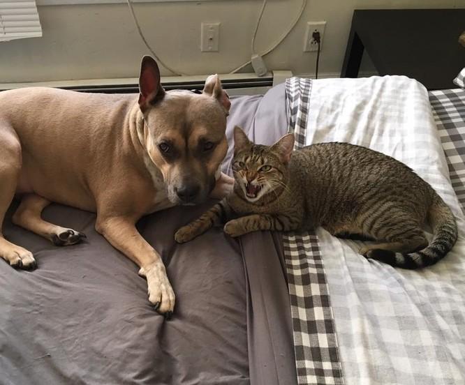 Chùm ảnh về mối quan hệ kỳ lạ giữa mèo và chó ảnh 6