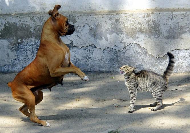 Chùm ảnh về mối quan hệ kỳ lạ giữa mèo và chó ảnh 17