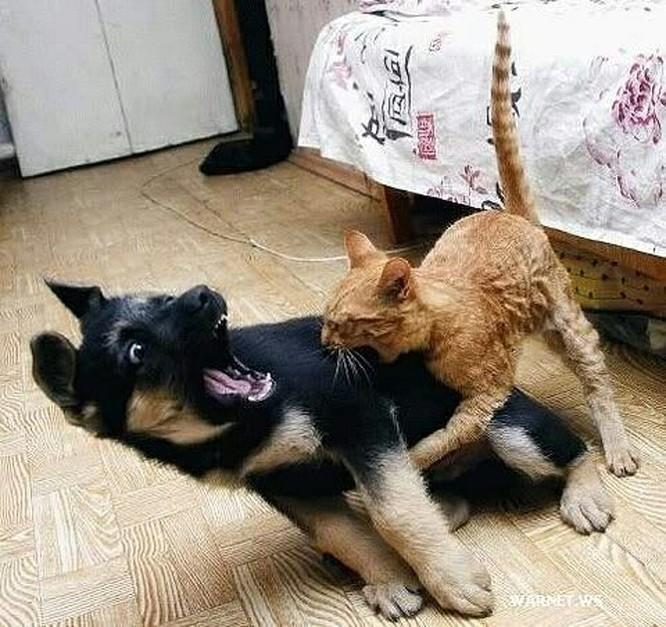 Chùm ảnh về mối quan hệ kỳ lạ giữa mèo và chó ảnh 15