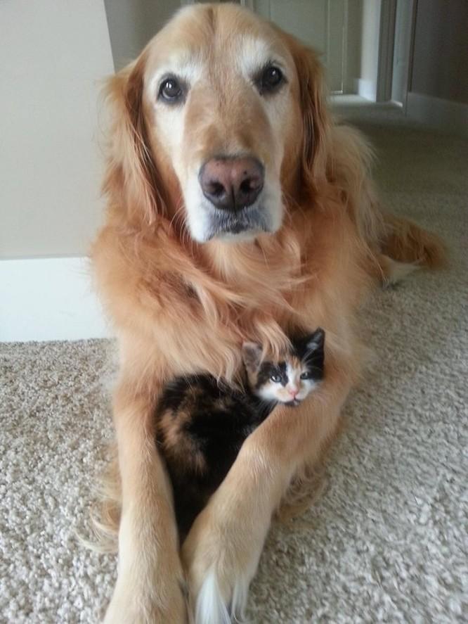 Chùm ảnh về mối quan hệ kỳ lạ giữa mèo và chó ảnh 14