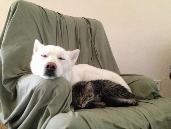 Chùm ảnh về mối quan hệ kỳ lạ giữa mèo và chó ảnh 12