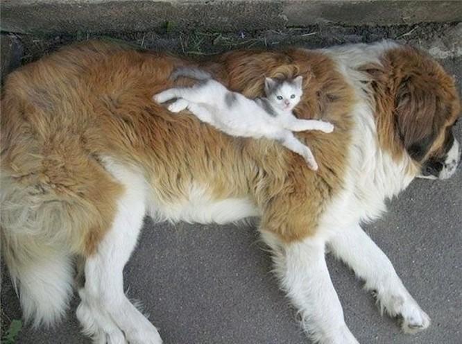 Chùm ảnh về mối quan hệ kỳ lạ giữa mèo và chó ảnh 11