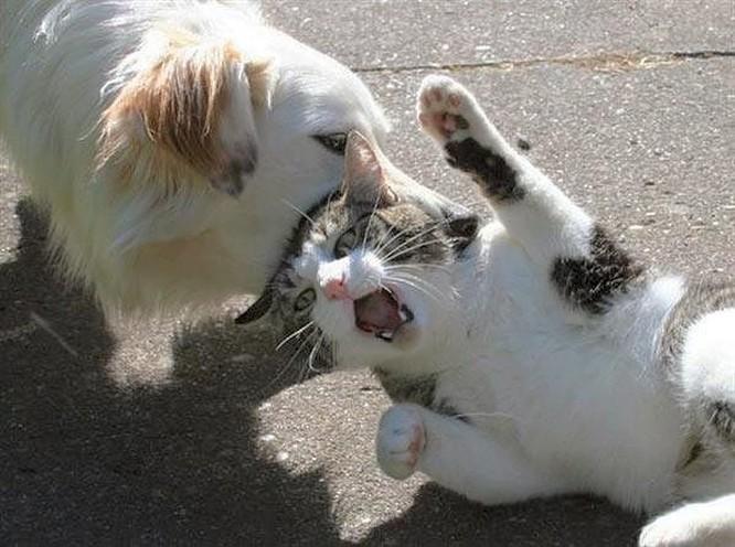 Chùm ảnh về mối quan hệ kỳ lạ giữa mèo và chó ảnh 10