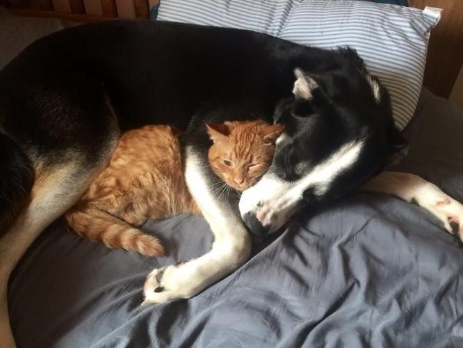 Chùm ảnh về mối quan hệ kỳ lạ giữa mèo và chó ảnh 8