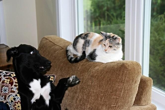 Chùm ảnh về mối quan hệ kỳ lạ giữa mèo và chó ảnh 1