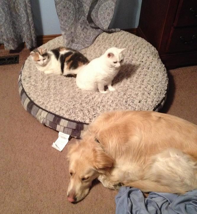 Chùm ảnh về mối quan hệ kỳ lạ giữa mèo và chó ảnh 4