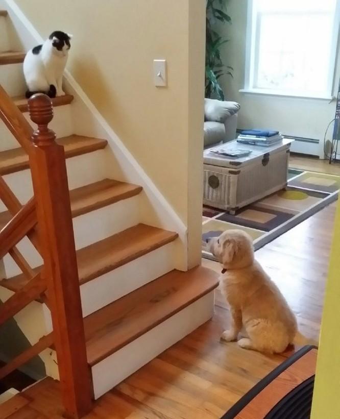 Chùm ảnh về mối quan hệ kỳ lạ giữa mèo và chó ảnh 7