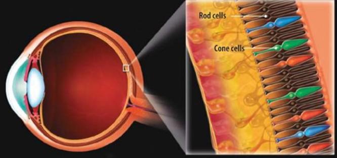 Tại sao nheo mắt lại giúp nhìn rõ hơn? ảnh 2