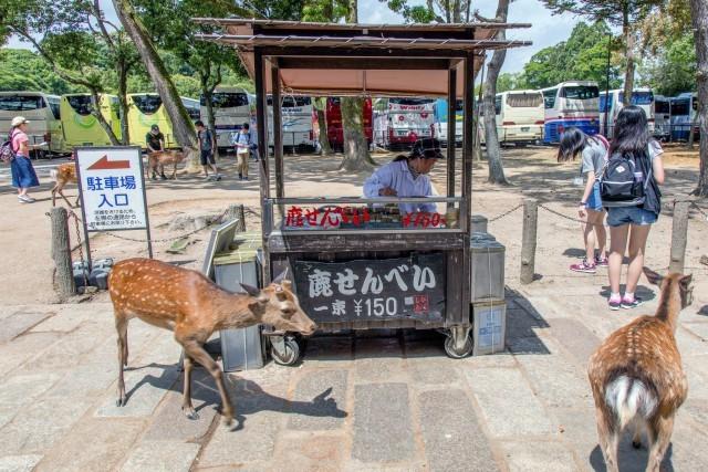 6 con hươu Nara đã chết từ năm ngoái đến nay vì bội thực rác nhựa của du khách ảnh 2