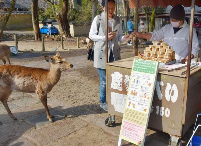 Chỉ nên cho hươu Nara ăn bánh quy senbei