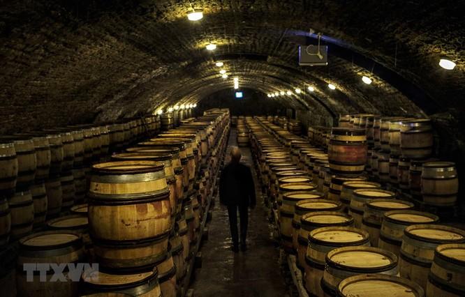Một hầm rượu vang ở Nuits-Saint-Georges thuộc vùng Bourgogne, Pháp. (Ảnh: AFP/TTXVN)