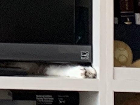 """""""Con mèo ở đâu?"""" và bức ảnh """"gây bão"""" trên mạng xã hội Twitter những ngày qua ảnh 5"""