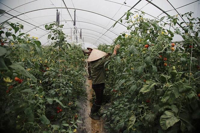 Trồng rau bằng smartphone, chị nông dân đều tay thu tiền tỷ ảnh 8