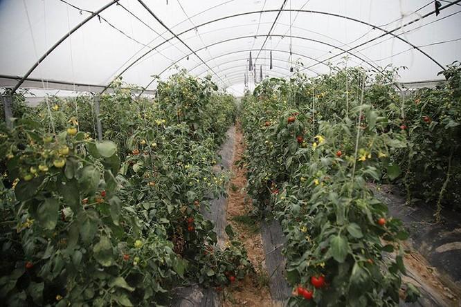 Trồng rau bằng smartphone, chị nông dân đều tay thu tiền tỷ ảnh 7