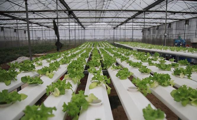 Trồng rau bằng smartphone, chị nông dân đều tay thu tiền tỷ ảnh 1