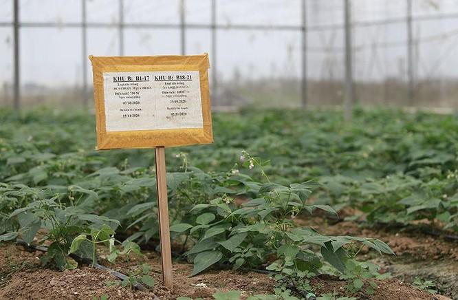 Trồng rau bằng smartphone, chị nông dân đều tay thu tiền tỷ ảnh 5