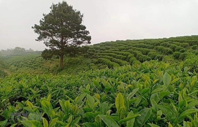 Khoa học công nghệ góp phần tăng năng lực cạnh tranh ngành nông nghiệp ảnh 1