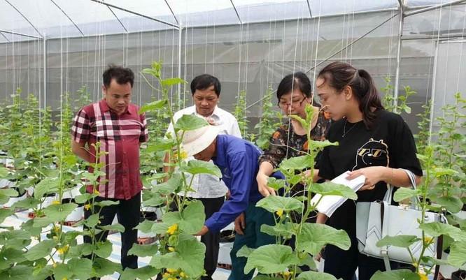 Chuyển đổi số trong nông nghiệp: Tạo xung lực phát triển ảnh 5