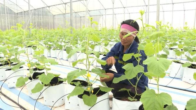 Chuyển đổi số trong nông nghiệp: Tạo xung lực phát triển ảnh 1