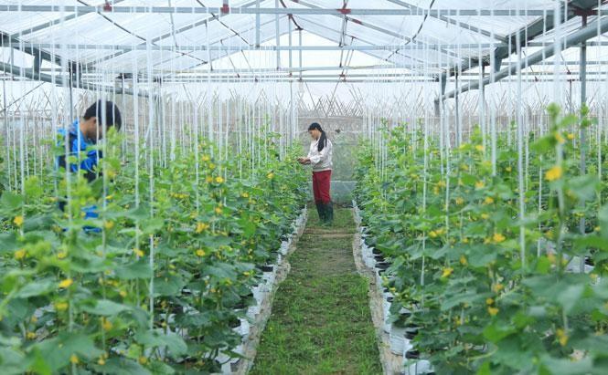 Hà Nội bổ sung gần 49 tỷ đồng để ứng dụng công nghệ cao trong sản xuất nông nghiệp ảnh 1