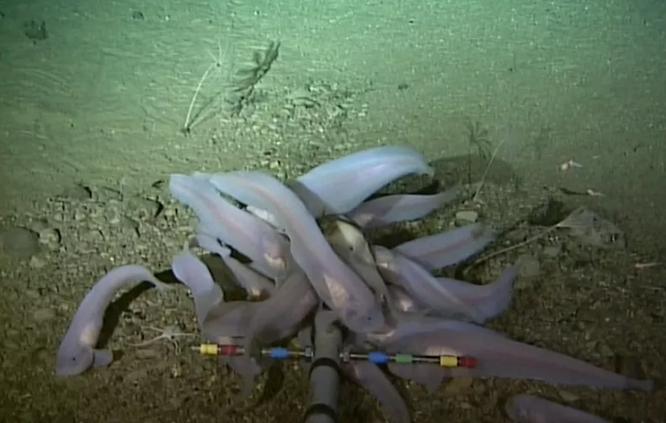 Phát hiện thủy ngân ở nơi sâu nhất thế giới ảnh 2