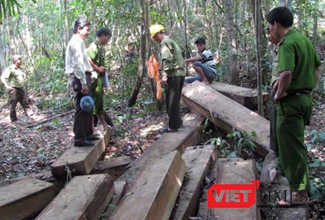 Đà Nẵng, phá rừng, Bà Nà-Núi Chúa, kiểm lâm, tòa án, xét xử, VietTimes