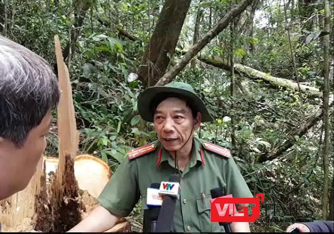 Quảng Nam, phá rừng, pơ mu, Nam Giang, biên giới, lớn nhất, điều tra, Kiểm lâm, bảo kê, VietTimes