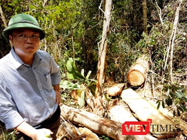 Quảng Nam, phá rừng, pơ mu, biên giới, lâm tặc, biên phòng, Lào, Nam Giang, VieTimes