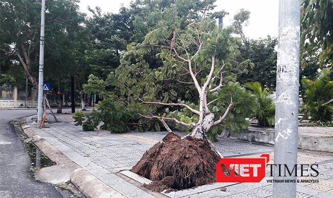 Cây đổ do bão ở Đà Nẵng