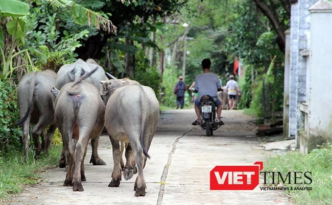 Quảng Nam, mưa lớn, thuỷ điện, xả lũ, ngập nặng, Hội An, VietTimes