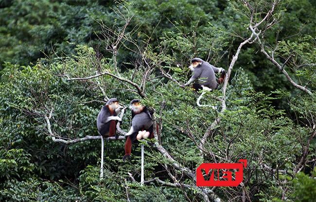Đà Nẵng, bảo vệ, động vật hoang dã, Sở Du lịch, cáp treo, Sơn Trà, đỉnh Bàn Cờ, du lịch, VietTimes