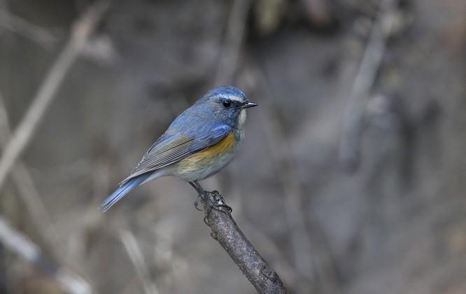 """Chùm ảnh: Những """"siêu mẫu"""" được săn đón ở Sơn Trà vào mùa chim di cư ảnh 10"""