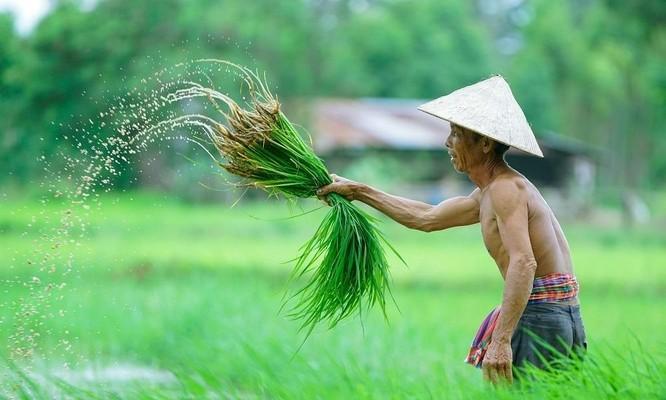 Phần 2: Cơ hội để Việt Nam trở thành một hình mẫu phát triển hậu Covid-19 ảnh 5